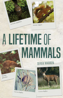 Picture of A Lifetime of Mammals